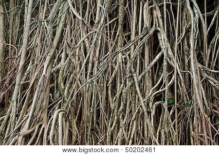 Tangle Tree Roots Background
