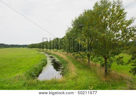 row trees with ditch in Dutch landscape at Hoog-Keppel