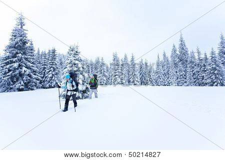 Hiker walks in snow forest