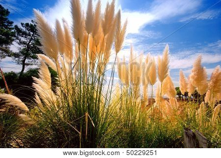Reed On Sky Background