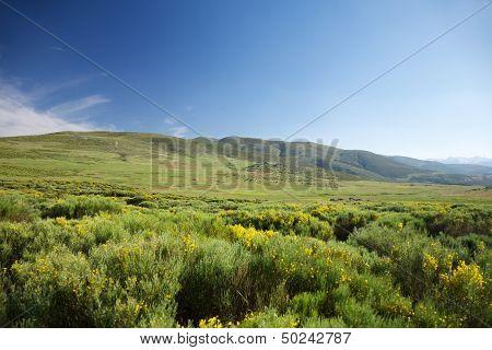 Meadows In Gredos Natural Park