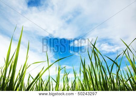 Worm's-eye View Of The The Grass And Sky