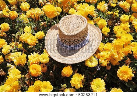 Solar spring midday. The elegant straw hat is left by the tourist in the field of blossoming yellow buttercups-ranunculus,