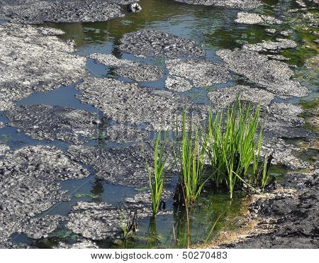 Grass in Tar Pits