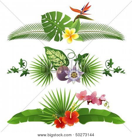 3 decorative tropical borders from leaves and flowers