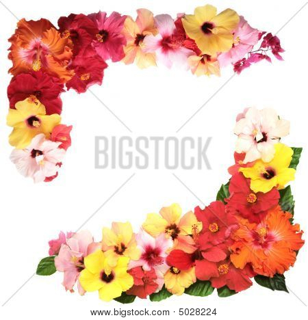 Corner With Colorful Hibiscus Flowers Isolated On White