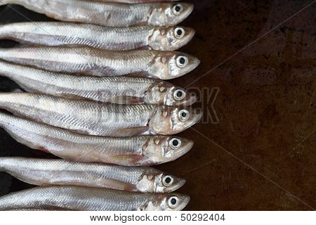 uncooked smelt fish