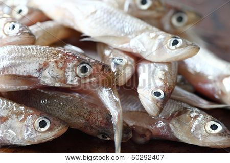 smelt fish in a heap