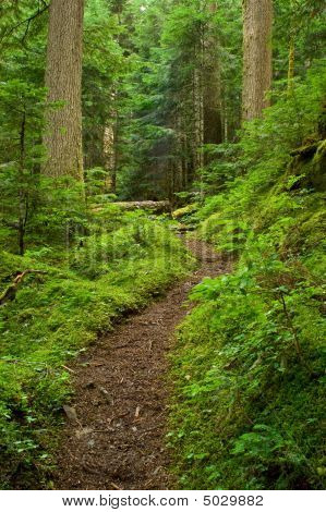 pacific northwest rainforest  Pacific Northwest Rainfor...
