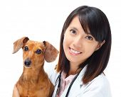 stock photo of dachshund dog  - Veterinarian with dachshund dog - JPG