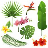 stock photo of tropical birds  - Set of tropical leaves and flowers - JPG