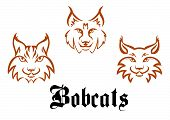 stock photo of wildcat  - Bobcats and lynxs for mascot or tattoo design - JPG