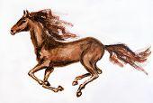 foto of horsetail  - Horse in motion - JPG