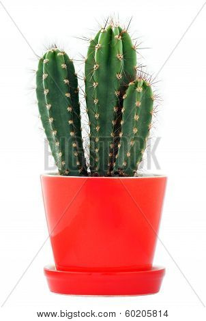 Cactus in a red flowerpot
