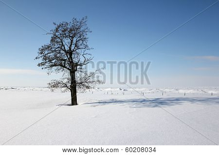 Snow And Ice Cover Landscape