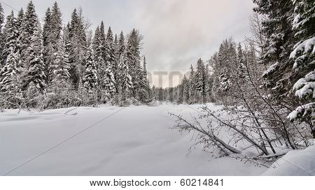 Forest Clearing With Fresh Blanket Of Snow