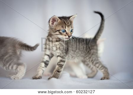 Little kitten interested looking in side