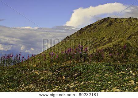 Happy hillside