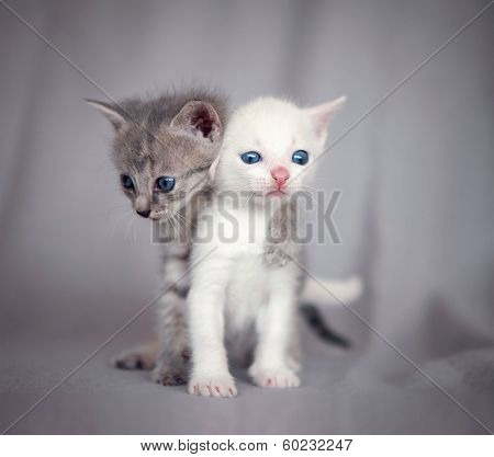 two kittens hugging