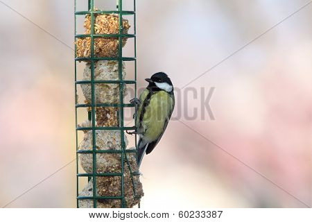 Great Tit On Hung Feeder