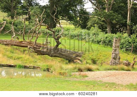 A Tree In A Country Park