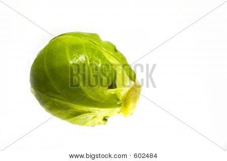 One Sprout Copy