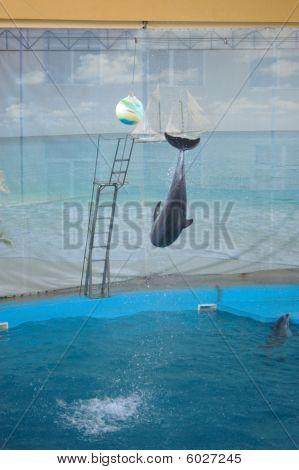 Delphine springen
