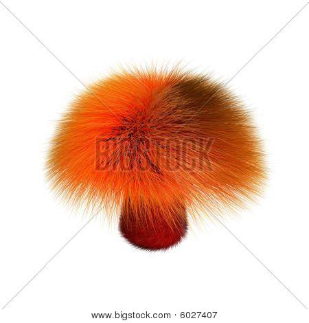 Furry red mushroom