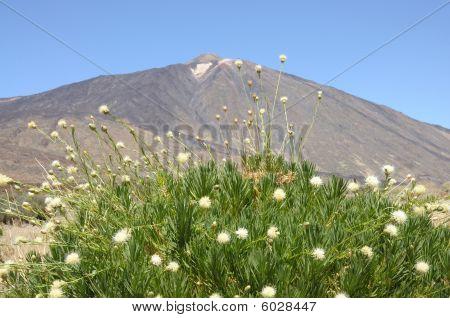 Pico De Teide, Tenerife Spain