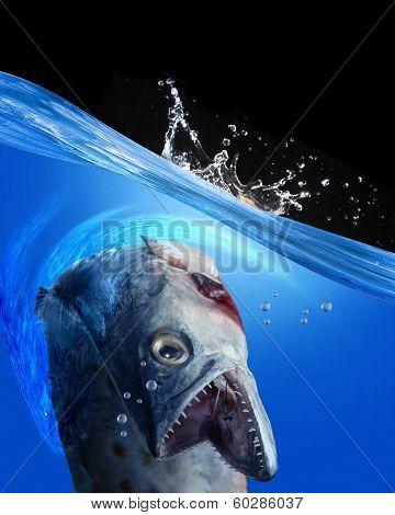 Monster Fish.