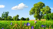 stock photo of hayfield  - Idyllic landscape with fresh green meadow trees spring flowers blue sky and white clouds - JPG