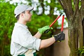 image of prunes  - Professional gardener pruning a tree - JPG