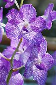 picture of orquidea  - Collection of orchid flower on green back ground - JPG