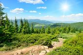 foto of blue spruce  - High mountains and sun on blue sky - JPG