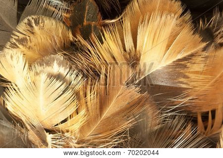 Closeup Of Feather Duster.