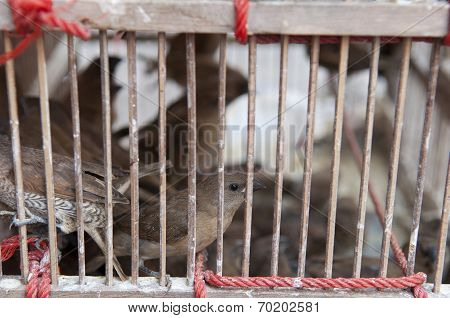 Imprison Bird In The Cage