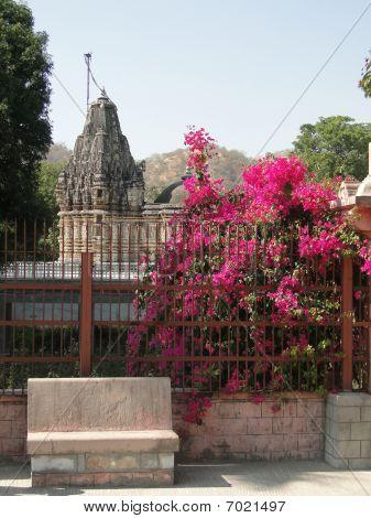 Bougainvillea Growing Outside Jain Temples