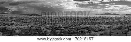 Sonora Desert Panorama