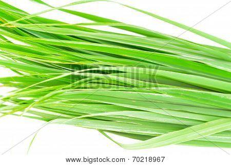 Lemon Grass Leaf
