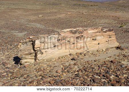 Petrified wood in Patagonia
