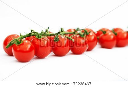 Panicle of tomatoes in a row, on white background, isolated