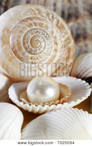 Sea Symbols And Creative Forms