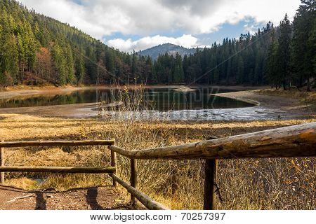 Pine Forest And Lake Near The Mountain