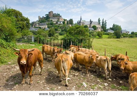 Cows Near Turenne