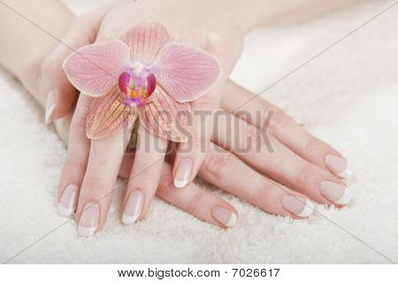 beautiful hands with perfect french manicure