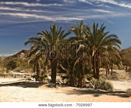 Oasis in the Mojave Desert of California