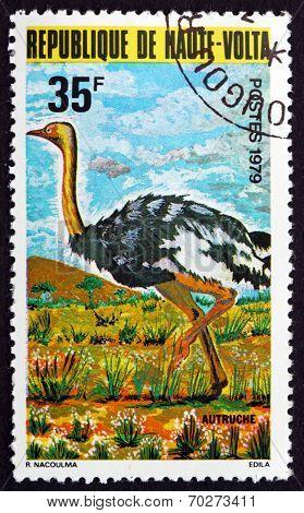 Postage Stamp Burkina Faso 1979 Ostrich, Flightless Bird
