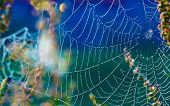 stock photo of cobweb  - Cobwebs on the grass with dew drops - JPG