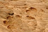 foto of hoof prints  - A pair of large hippo foot prints in the sand along their river habitat - JPG