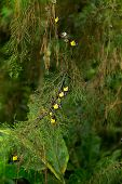 picture of cocoon tree  - Colorful new born butterfly on pine tree - JPG
